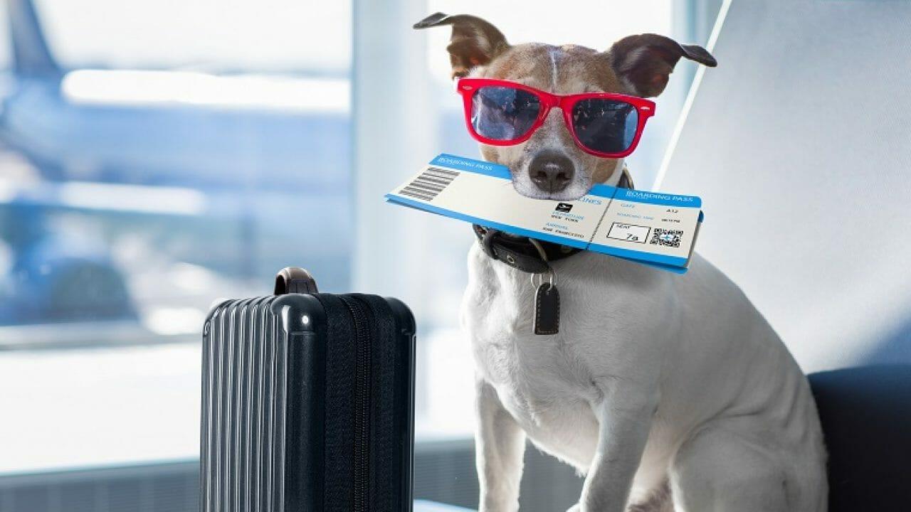Fin Pets Finances